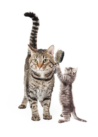 hind: Side view of cute kitten standing up on hind legs stretching paws up in prayer position