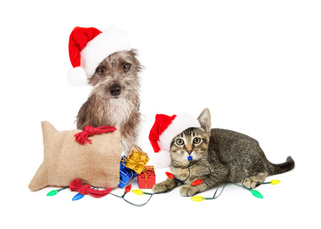 Funny dog and cat wearing Santa hats with presents and lights Stock Photo