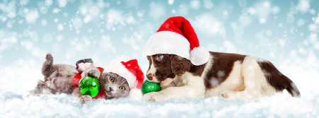 Cute puppy and kitten playing with Christmas ornaments in the snow