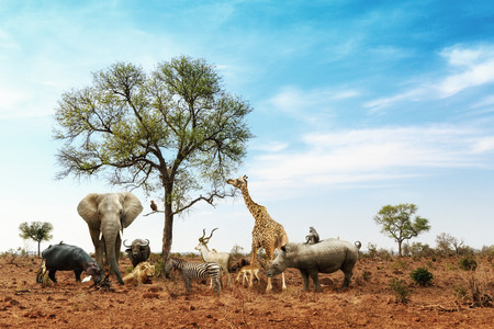 Conceptual image of common African safari wildlife animals meeting together around a tree in Kruger National Park Imagens