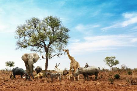 Conceptueel beeld van gemeenschappelijke Afrikaanse safari wilde dieren die samenkomen om een boom in het Kruger National Park
