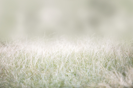 Tall grass with room for text in soft dreamy background