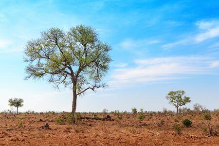 cielos abiertos: campo abierto en el Parque Nacional Kruger, Sudáfrica con espacio para texto
