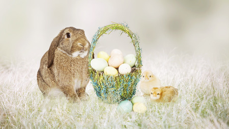 Cute Easter bunny and baby chicks sitting with a basket of pastel color eggs Stock Photo