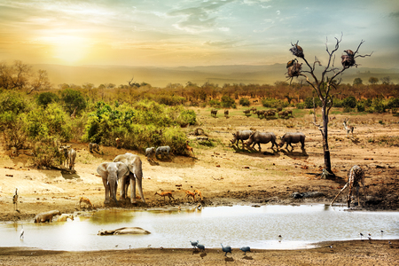 Dreamy scene of common South African safari wildlife animals together at sunset Archivio Fotografico