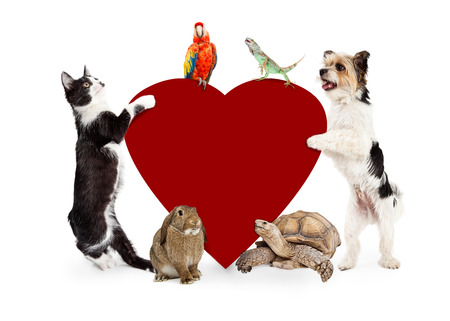 Common domestic pets around a blank red Valentines Day heart with room for text