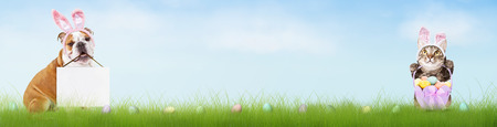Easter themed half web banner with dog and cat in bunny ears with blank sign and eggs