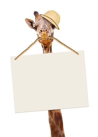 Funny image of giraffe wearing safari guide hat and carrying a blank sign in his mouth. Imagens