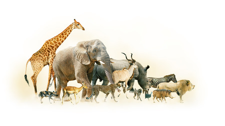 animals together: Common African Safari animals walking together with dusty background