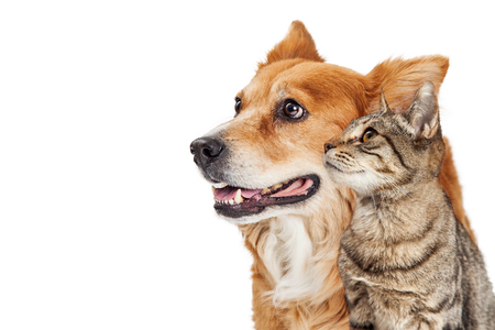 Happy dog and cat together looking to side - Closeup over white with copy space Stockfoto