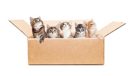 cute kittens: Litter of cute baby kittens in a cardboard box