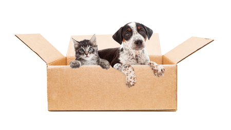 Cute mixed breed puppy and kitten together in cardboard box