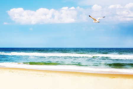 Peaceful ocean beach scene with seagull flying overhead Stock Photo