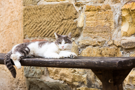 Pretty grey and white cat lying on a wooden bench outdoors in front of a stone wall