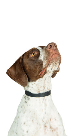Vertical orientation banner of dog looking up into blank copy space