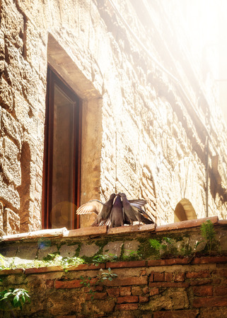 Three pigeon birds perched on a ledge in Italy kissing, Copy space in sun flare.