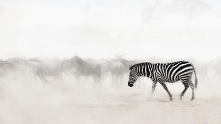 Een enkele zebra loopt door het stof in Kenia, Afrika met Wildebeest op de achtergrond. Opzettelijke zachte focus voor kopie ruimte in de nevel