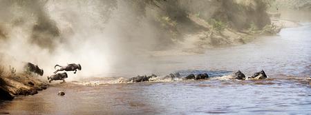 Wildebeest die in de Mara-rivier in Kenia Afrika tijdens migratieseizoen springt. Op maat gemaakt voor de banner van een website of sociale media