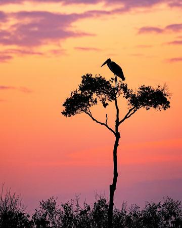 Silhouet van een Maribou-ooievaar op een Acacia-boom bij zonsopgang met een pastelkleur roze oranje en purpere hemel