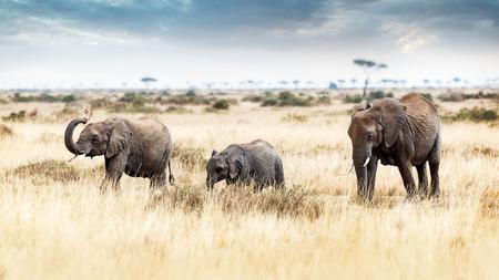 Famiglia dell'elefante che cammina nei pascoli del Masai Mara nel Kenya, Africa Archivio Fotografico - 84945880