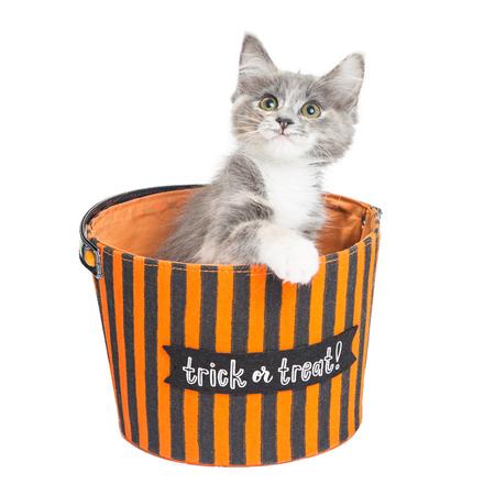 Cute young kitten sitting in an orange and black trick-or-treat Halloween basket Reklamní fotografie