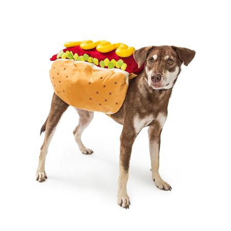 Grappige foto van een hond die een kostuum van hotdoghalloween draagt Stockfoto