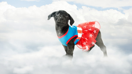 Puppy wearing super hero costume stand in clouds in the sky Stock Photo
