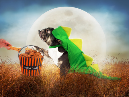 Funny dog in dinosaur costume outside trick-or-treating for biscuits on Halloween night with full moon