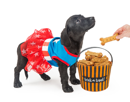 Puppy Trick-Or-Treating pour les biscuits
