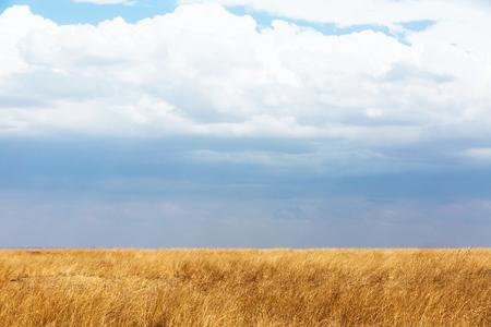 赤麦草と曇り空でケニア、アフリカ全体のオープン フィールド