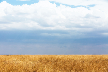 Wide open field in Kenya, Africa with red oat grass and cloudy sky
