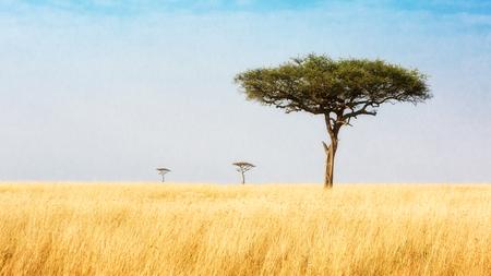 オフリード、ケニア、アフリカの平原の広いオープン フィールドの距離に 3 つのアカシアの木
