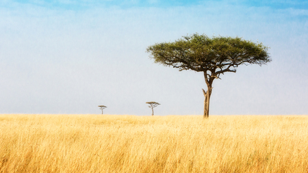 Three Acacia trees leading off into the distance in a wide open field in the plains of Kenya, Africa