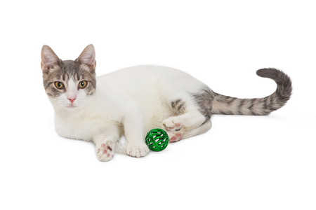 Cute cat lying down on white with green jingle ball toy