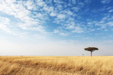 アフリカ、ケニアのマサイマラ国立保護区の美しいオープン フィールドを介して草刈道