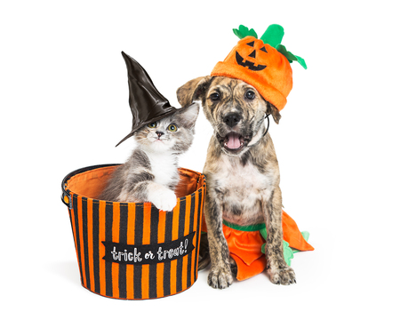Grappige puppy en kitten in Halloween-kostuums met trick-or-treat-mand