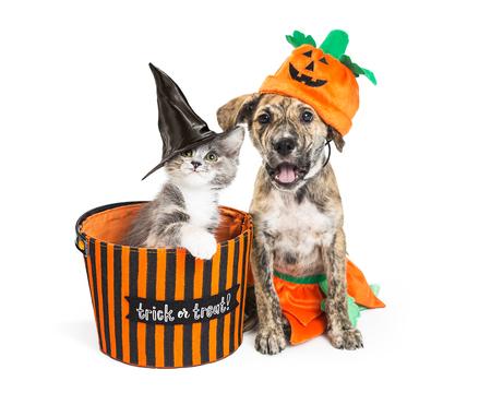 Zabawny szczeniak i kotek w kostiumach na Halloween z koszem cukierek albo psikus