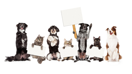 Row of cats and dogs together sitting up and holding blank signs to text onto