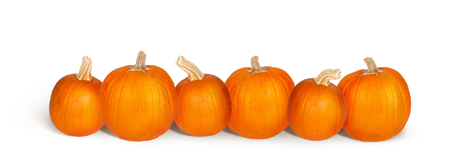 Row of six fresh pumpkins isolated on white with copy space on a horizontal banner Reklamní fotografie