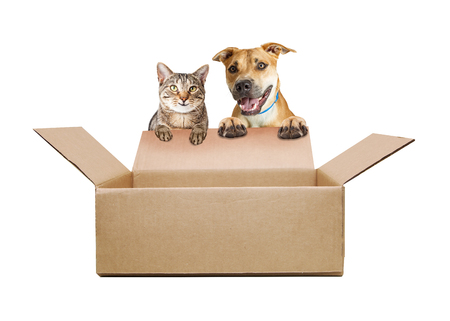Happy and smilig dog and cat opening a cardboard shipping box. Empty contents so you can add your products in