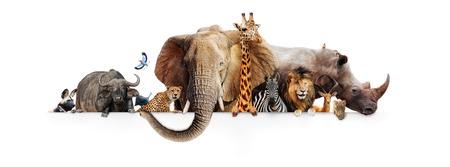 Fila de los animales de safari africanos que cuelgan sus patas sobre una bandera blanca. Tamaño de la imagen para adaptarse a un marcador de posición de fotos de línea de tiempo de redes sociales populares Foto de archivo - 92428814