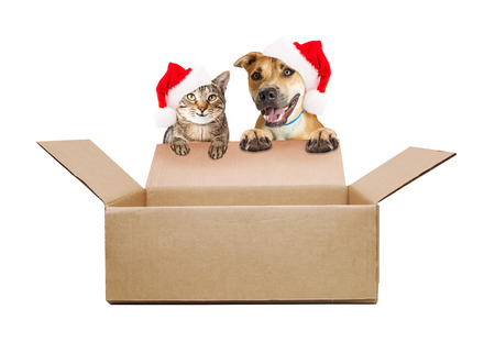 Happy cat and dog wearing santa hats hanging over empty shipping box for you to add your products to