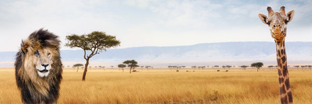 Lion and giraffe closeup over Kenya, Africa scene. Sized for website or social media header