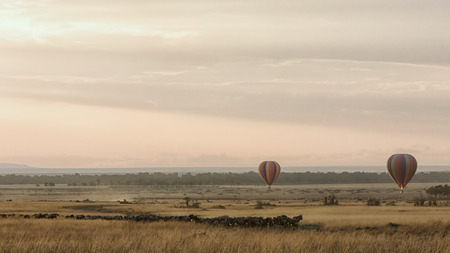 Herd of wildebeest migrating through the Masai Mara National Reserve in Kenya, Africa with hot ait balloons floating at sunrise