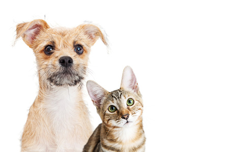 Puppy and kitten together with cute expression over white with blank copy space