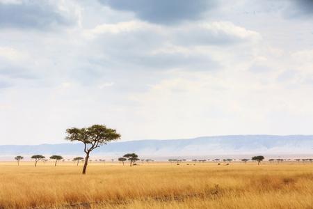 Abrir el campo de hierba en la Reserva Nacional de Masai Mara en Kenia, África con elefantes caminando en la distancia