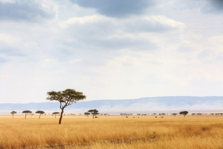 Open grass field in the Masai Mara National Reserve in Kenya, Africa with elephants walking in the far distance