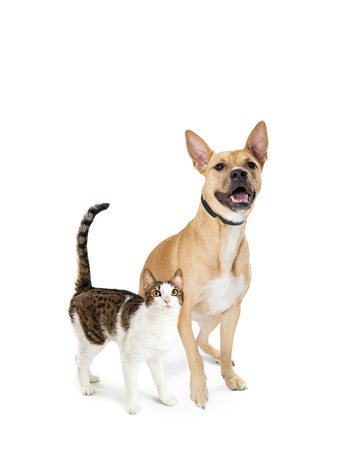 Cat and dog together over white, looking up into blank copy space with excited expression