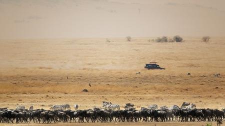 Kudde van het meest wildebeest en de zebra in een brede Afrikaanse savannescène met een bewegend voertuig van de toeristensafari op de achtergrond en ruimte voor tekst Stockfoto