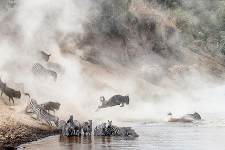 Drastische Fotoherden des Zebras und des Gnus, die in Mara River in Kenia, Afrika während der Migrationsjahreszeit springen Standard-Bild